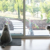 adelaide hills cattery